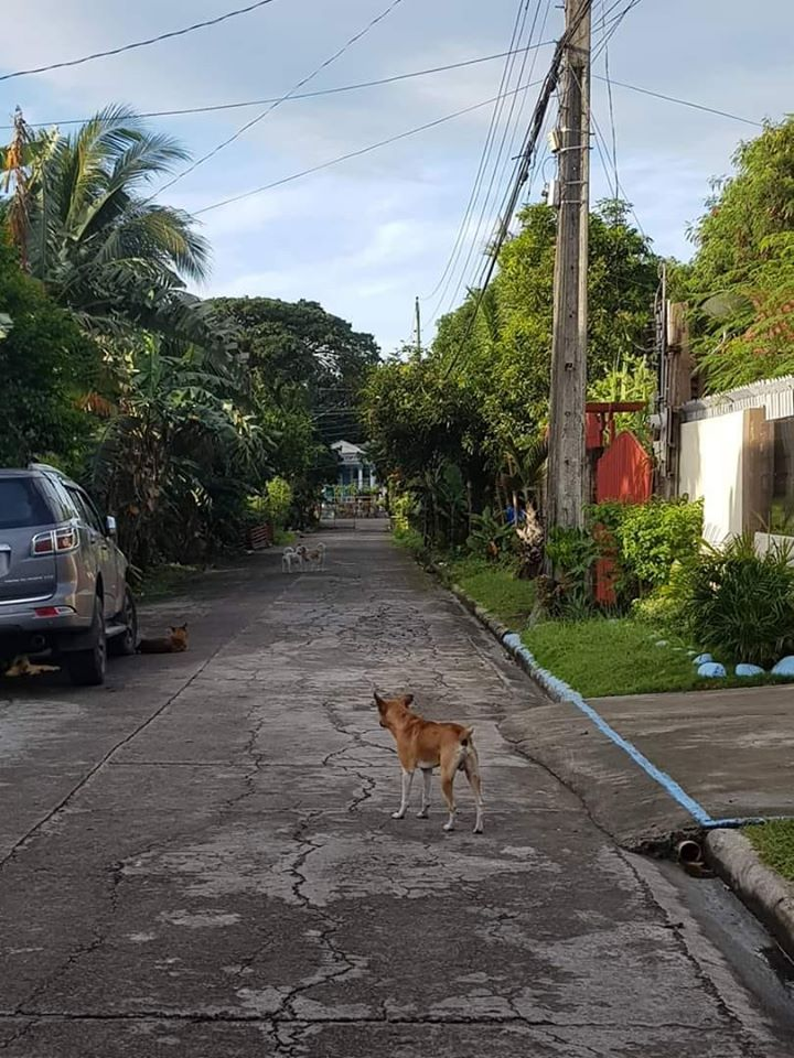 Lawyer Jayvee Hinlo sent this photo taken 3 January 2020 at Villa Celia  Subdivision in Taculing village. He asks if local governments and the interior and local government department have already implemented the  Anti-Rabies Law.