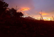 Morning breaks over Mt. Kanlaon in this shot with newly-planted sugarcane in the foreground taken from the town of La Castellana. | Photo by Julius D. Mariveles